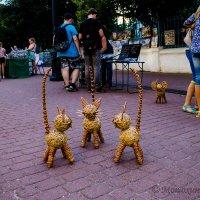 Три кота и СЛОН :: Владимир Мошохин