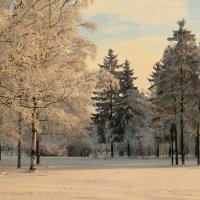 Вечерняя зимняя полянка :: Владимир Гилясев