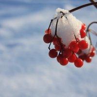 Последний снег :: Валерий Кишилов