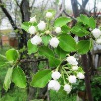 Весна идет :: татьяна