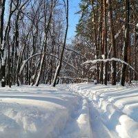 Ещё в лесах белеет снег.. :: Андрей Заломленков