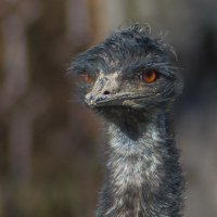Портрет страуса :: Лада