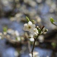 Весна пришла-22. :: Руслан Грицунь