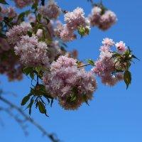 Весна пришла-21. :: Руслан Грицунь