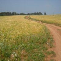в поле :: Александр Попков