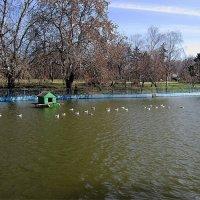 плыли чайки по воде... ) :: Людмила