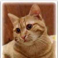 Не каждый человек поймет,   зачем в квартире нужен кот? :: Людмила Богданова (Скачко)
