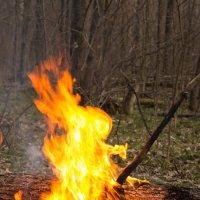 огневушка-поскакушка :: Ирина Холодная