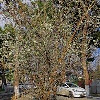 Весна на ул. Шевченко :: Валерий Дворников