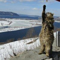 Умный котик :: наталия