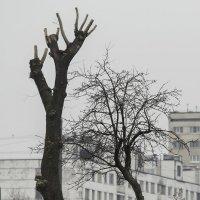 Молитва о весне :: Игорь Герман