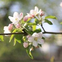 Весна пришла-34. :: Руслан Грицунь