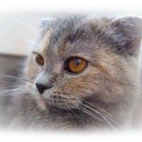 Неповторимы кошки и красивы ... :: Людмила Богданова (Скачко)
