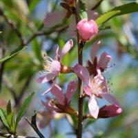 Цветы :: Agnivarshi Малтыз