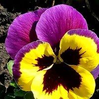 весна цветет :: Антонина Владимировна