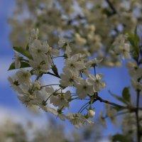 Весна пришла-40. :: Руслан Грицунь