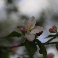 Весна пришла-37. :: Руслан Грицунь