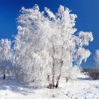 Красавица в белом наряде :: Анатолий Иргл