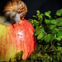 Наливное яблочко :: Наталия Горюнова