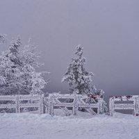 freeze/мороз :: Dmitry Ozersky