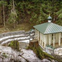 Весной в лесу. :: Виталий