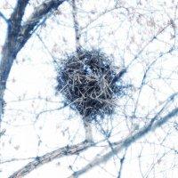 Гнездо :: Иван Пархутов