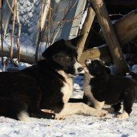 Мама, поиграй со мной :: Николай Масляев