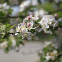 Весна пришла-44. :: Руслан Грицунь