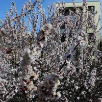 Весна! Весна! :: Наталья (D.Nat@lia) Джикидзе (Берёзина)