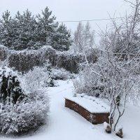 Зима вернулась :: Светлана Ященко