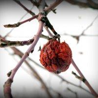 Яблочки весенние.. :: Андрей Заломленков