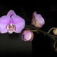 Подаренный цветок. :: Мила Бовкун