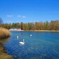 Ах, весна!  Снова в воздухе запах весеннего  неба... :: Galina Dzubina