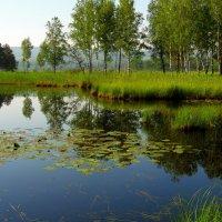 Озеро лесное. :: nadyasilyuk Вознюк