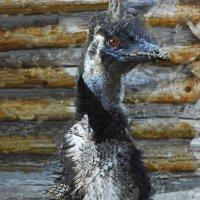 важная птица :: Юлия Денискина