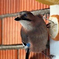 в гости из леса :: linnud