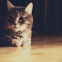 Cat :: Роман Никитин