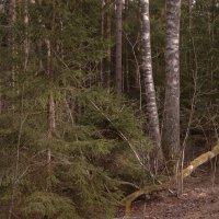 фигуры леса :: Михаил Жуковский