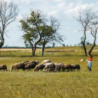 Пастушки :: Дмитрий -
