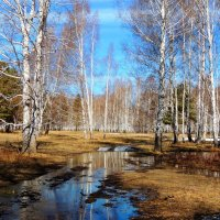 Весна идёт-весне дорогу... :: Геннадий Ячменев