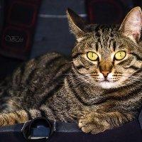Мой кот. :: Вячеслав Ложкин
