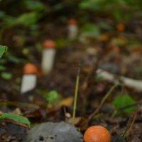 Еще грибы :: Максим Маевский