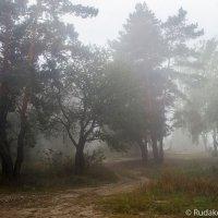 В туманной тишине :: Сергей