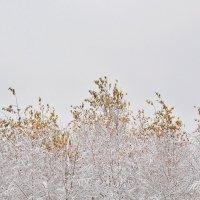 Зима: загрузка :: Kaisa Mironova