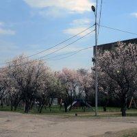 Весенний Рай :: Наталья Джикидзе (Берёзина)