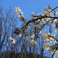 Веточка весны :: Наталья Джикидзе (Берёзина)
