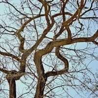 Дерево :: Игорь Попов