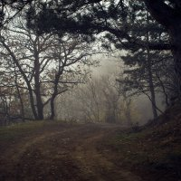 Лесная дорога :: Sergey Yablokov