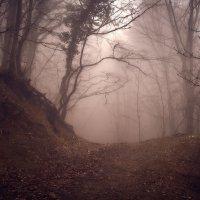 Туманный лес :: Sergey Yablokov