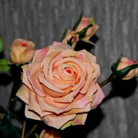 роза :: Виктория Королькова